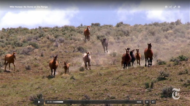 Wild Horse Wars: Exposing a $40 million animal management boondoggle