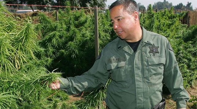 Joint Forces: Following local enforcement as they wage a war on weed
