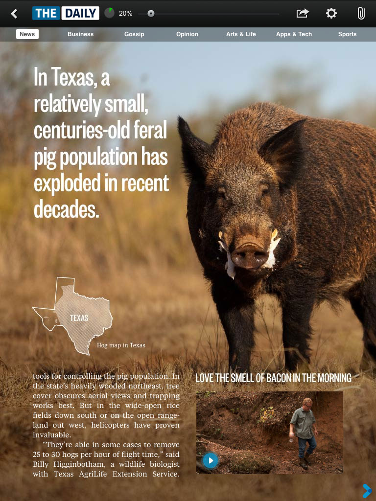 Aporkalypse Now: Texas declares war on feral pigs